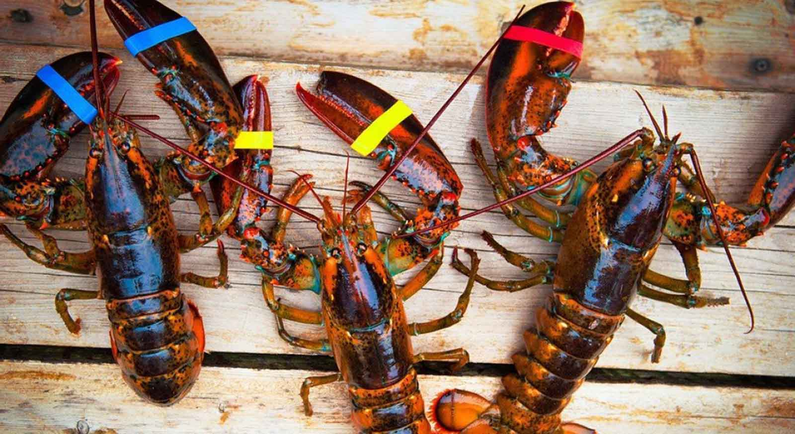 Liberty Lobster - Live seafood delivered directly to your